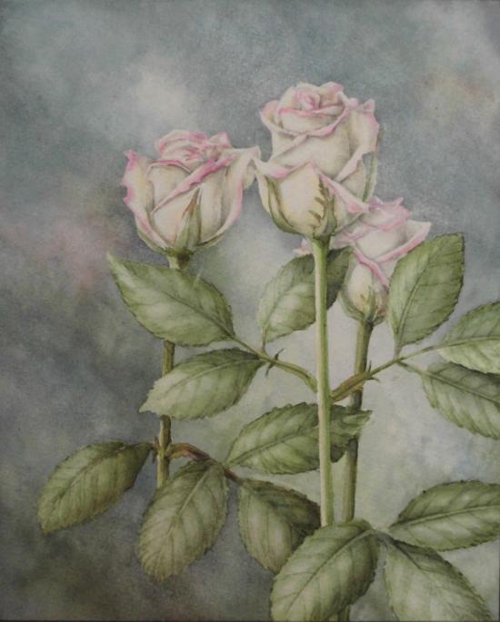 白バラ 1601