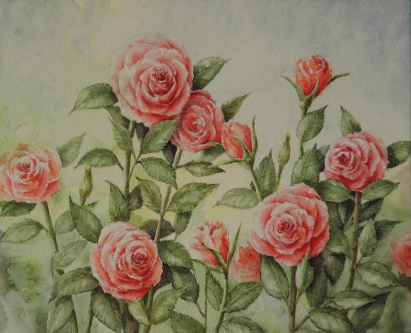 赤いバラ 1601