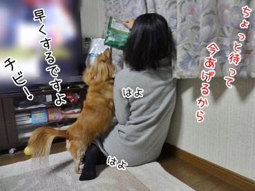 kinako3858.jpg
