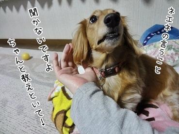 kinako3861.jpg