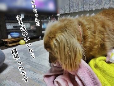 kinako3873.jpg