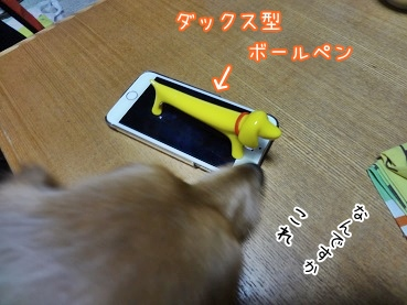 kinako3875.jpg