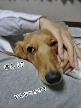 kinako3877.jpg