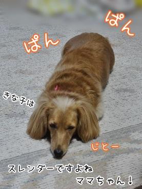 kinako3879.jpg