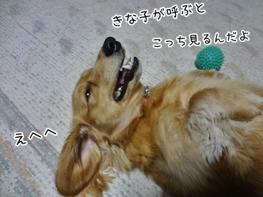kinako3884.jpg