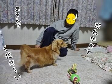 kinako3886.jpg