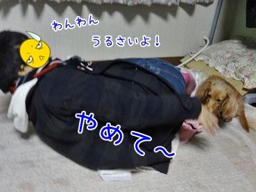 kinako3900.jpg