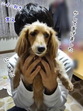 kinako3903.jpg
