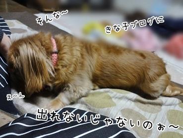 kinako3904.jpg