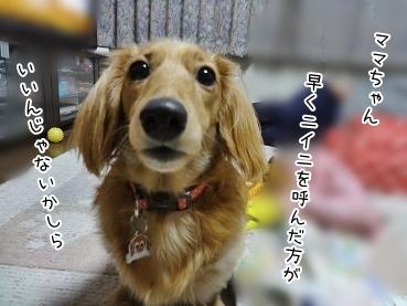 kinako3905.jpg