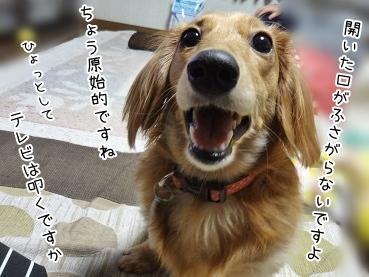 kinako3906.jpg