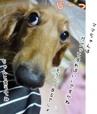 kinako3908.jpg