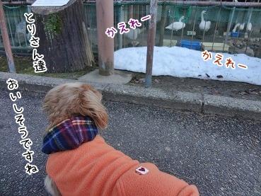 kinako3912.jpg