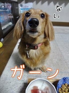 kinako3930.jpg