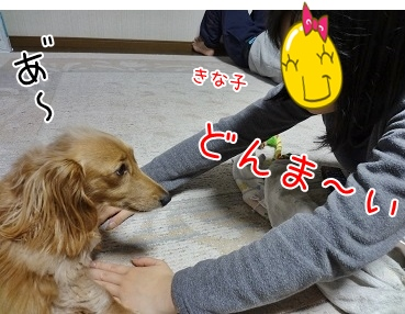kinako3932.jpg