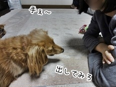 kinako3933.jpg