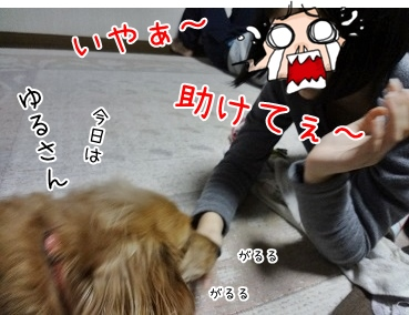 kinako3935.jpg