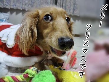 kinako3941.jpg