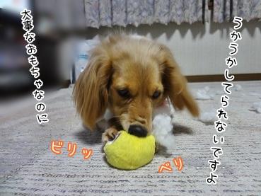 kinako3945.jpg