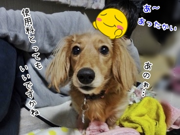 kinako3963.jpg