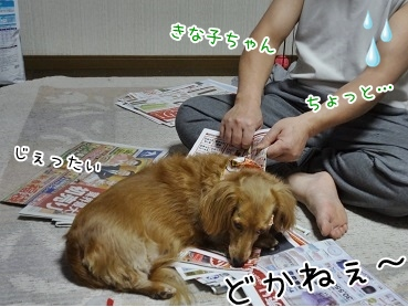 kinako3986.jpg