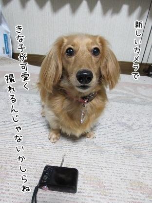 kinako3988.jpg