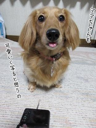 kinako3989.jpg