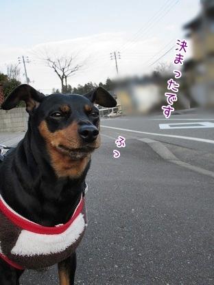 kinako3993.jpg