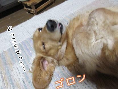 kinako4012.jpg