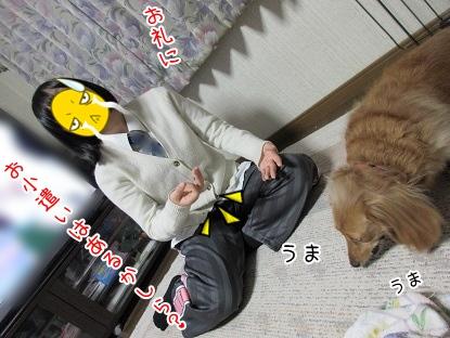 kinako4018.jpg