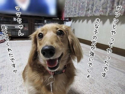 kinako4019.jpg