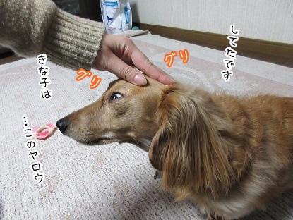 kinako4027.jpg