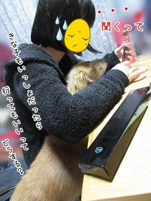kinako4032.jpg