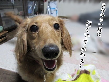 kinako4034.jpg