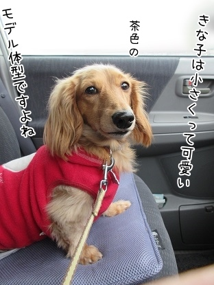 kinako4037.jpg