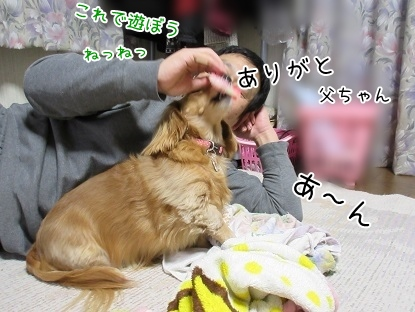 kinako4046.jpg