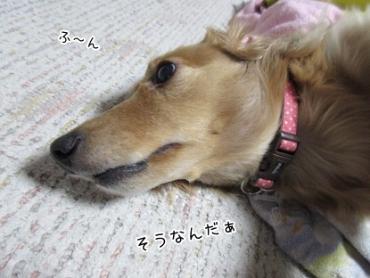 kinako4054.jpg
