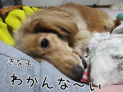kinako4063.jpg