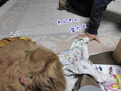 kinako4064.jpg