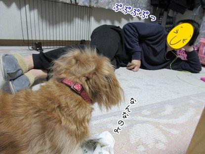 kinako4066.jpg