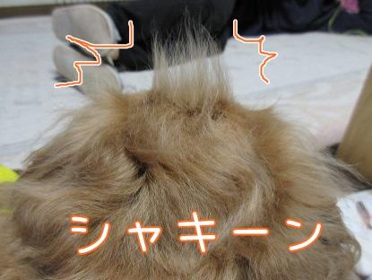 kinako4069.jpg
