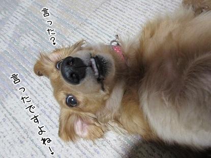 kinako4073.jpg