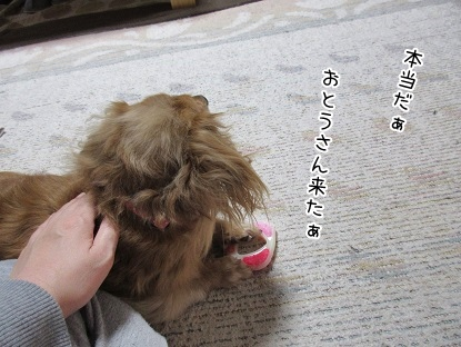 kinako4075.jpg