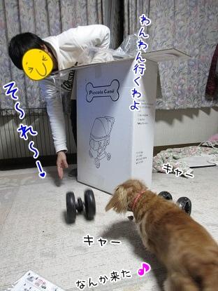 kinako4082.jpg