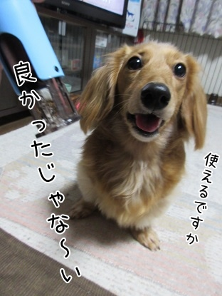 kinako4107.jpg