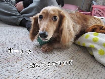 kinako4108.jpg