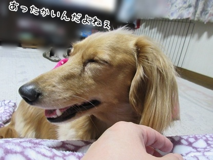 kinako4120.jpg