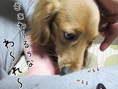 kinako4128.jpg