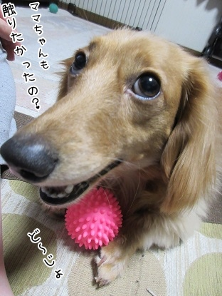 kinako4129.jpg