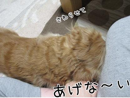 kinako4130.jpg